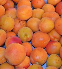 apricot-853881_960_720