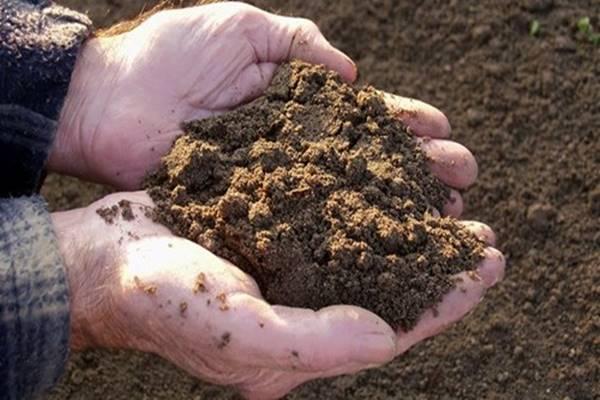 Elrettentő kutatási eredmények – 60 évünk van hátra a termő Földön