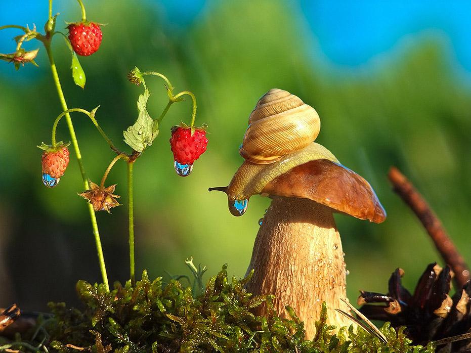 A csodák világa: a csigák élete 14 képben