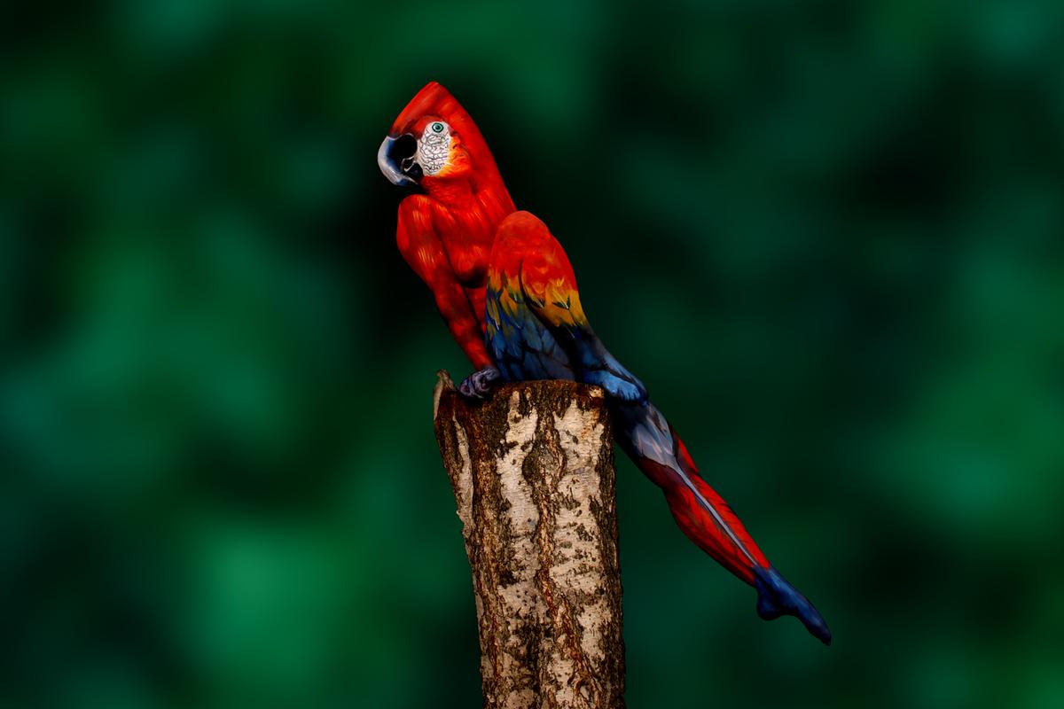 Látod a papagájt? Pedig nincs ott!