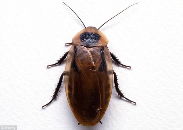 a98837_inside-ear_1-cockroach