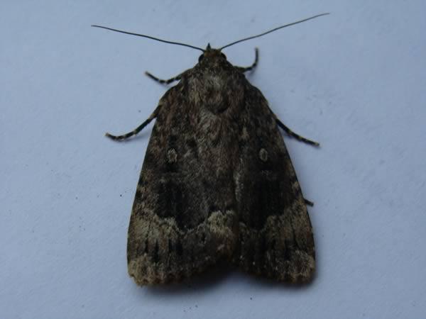 a98837_inside-ear_3-moth