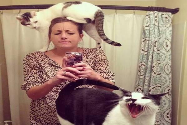 macska-szemelyester1