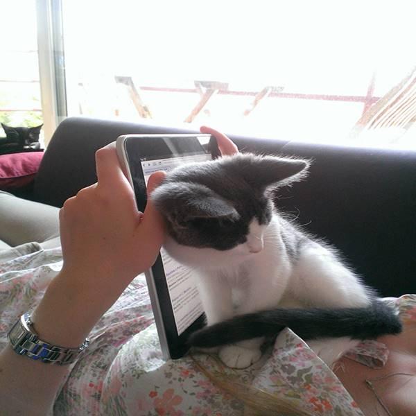 macska-szemelyester6