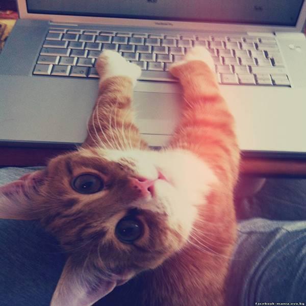 macska-szemelyester8