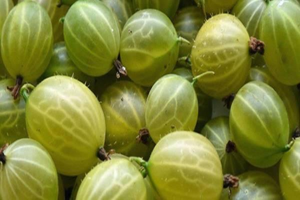 Hobbyrendelés.hu: Ez az apró gyümölcs a világ egyik