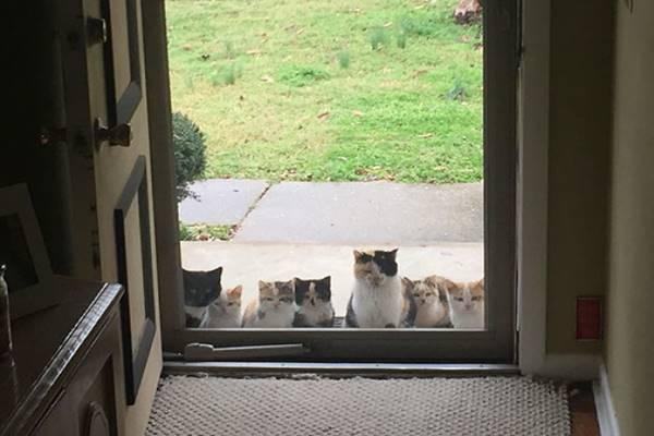 azt hiszem, fogyás macskák