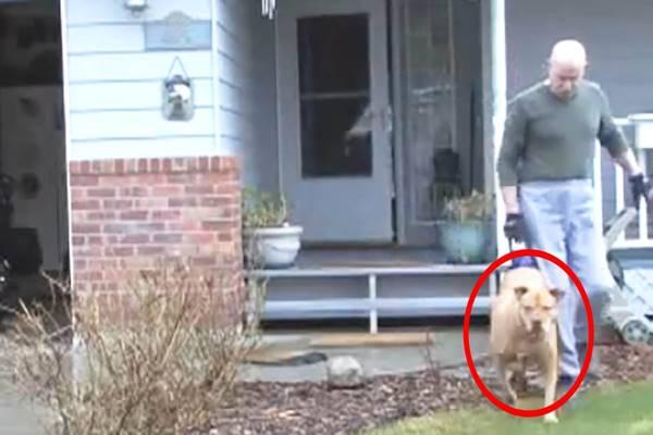Úgy néz ki, hogy csak sétálni viszi kutyáját, de ha közelebbről megnézed… ISTENEM!
