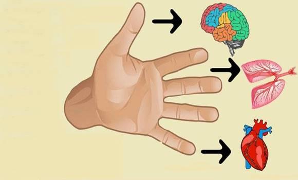 hogyan kezeljük a belső szervek visszérit