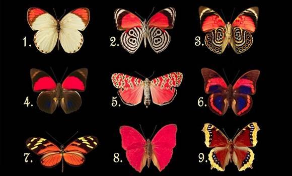 Válassz egyet a pillangók közül és ismerd meg a tudatalattid legrejtettebb titkát!