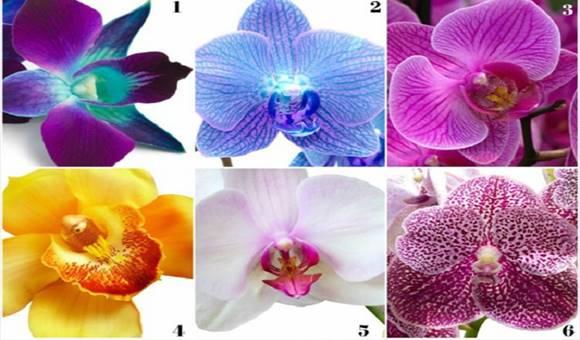 Válassz egy orchideát és tudd meg, hogy milyen üzenetet hordoz számodra