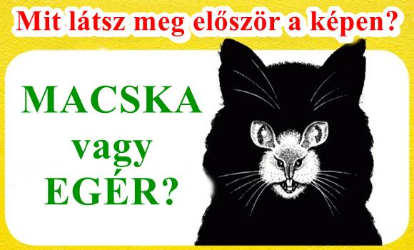 Macska vagy egér? Mit láttál meg először a képen? A válaszod titkokat fed fel a személyiségedről